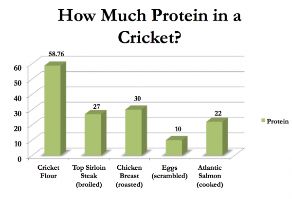 How Much Protein In a Cricket