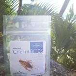 Buy Crickets