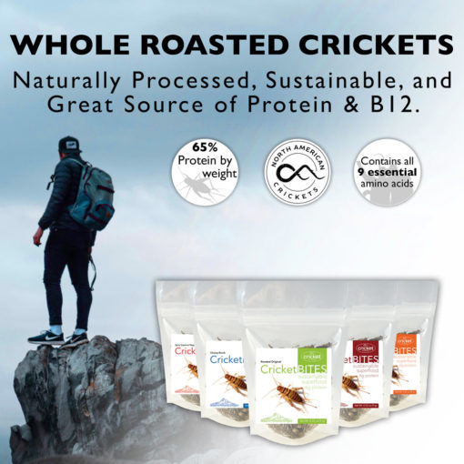 Buy Edible Insects
