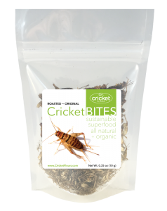 Roasted Cricket Edible Insect