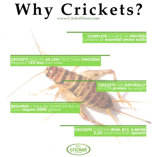 Why Cricket Flour