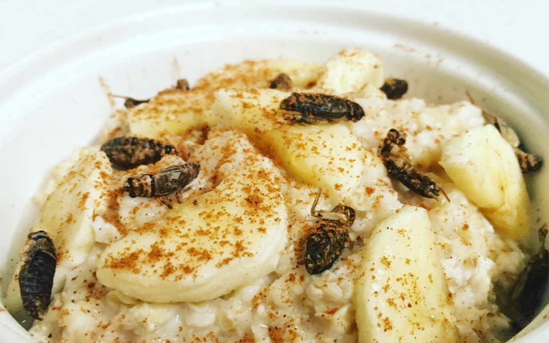 Roasted Cricket and Banana Oatmeal