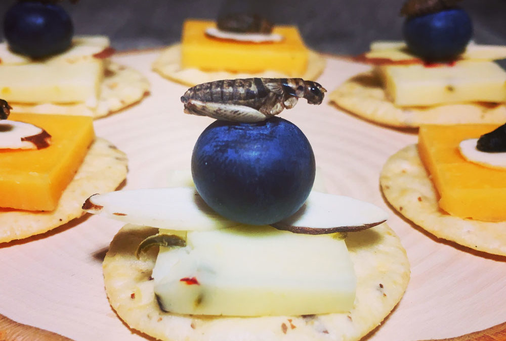 Crickets, Cheese & Crackers – Roasted Cricket Recipe