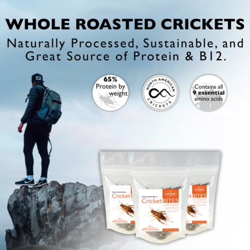 Buy Roasted Crickets Flavor