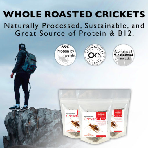 Edible Insect Snacks in US
