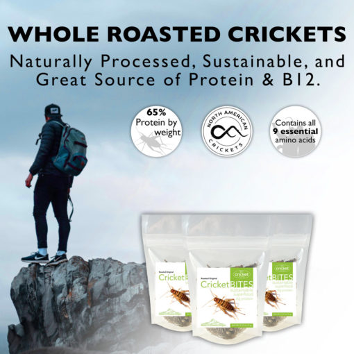 Edible Insects from US