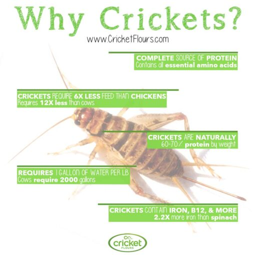 Reasons for Eating Bugs and Crickets