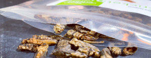 Edible Insects to Buy