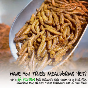 Eat a Mealworm - Edible Insects