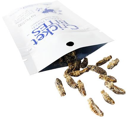 Edible Insects Crickets Protein Human Consumption