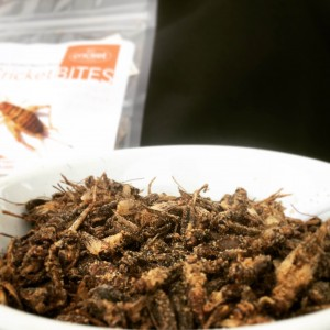 Roasted Crickets